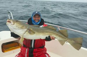 Pacific Cod — Frederic Murier