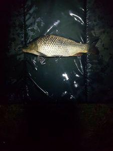 Common Carp — Alex.Fishing. 79