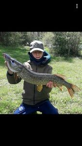Northern Pike — Baptiste Nicolas