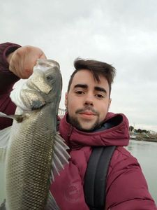 European Bass — Bastien Amigo