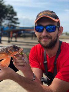 Grey Gurnard — Fishing For You