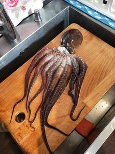 Common Octopus — Julien Ficara