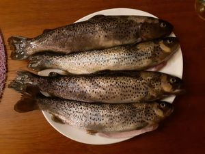 Brown Trout — Denis Brigat