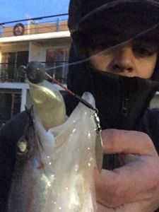 Zander — Adriano Crossbow fisherman