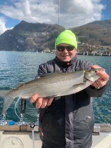 European Whitefish — Isufisch Stansstad
