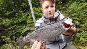 Rainbow Trout — LEBAS MAXIME