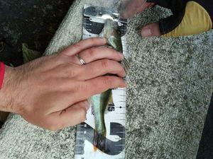 European Perch — christophe bellec