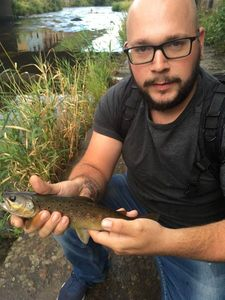 Brown Trout — Jul Weigart