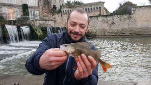 European Perch — Aurelien Pean