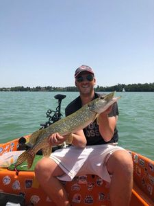 Northern Pike — Steph' Vrba