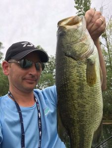 Largemouth Bass — Greg Teamtraillate