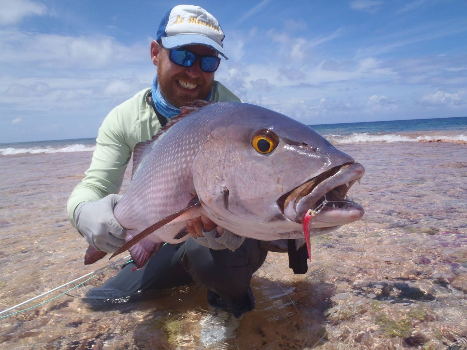 African Red Snapper