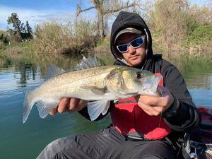 European Bass — kevin gueniot