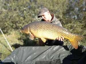 Common Carp — Rod CarpAngler