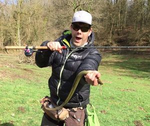 Anguille d'Europe (Anguille Commune) — David Pierron