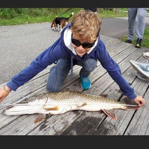 Northern Pike — Jules Le Boucher