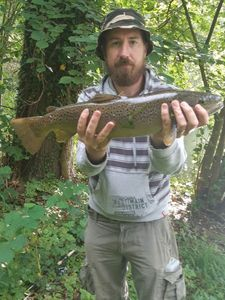 Brown Trout — Romain Duvalet