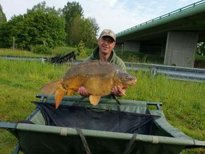 Mirror Carp — Christophe drincqbier