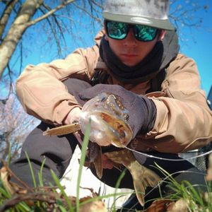 Northern Pike — The Street Fisher