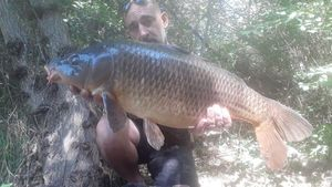 Common Carp — Michel 66