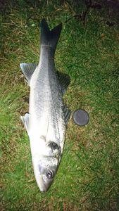 European Bass — Thibault Noesser