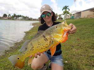 Peacock bass (Speckled Pavon) — Chrystel Kimmerling Maistrello