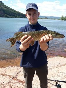 Northern Pike — Maxime  Jaffuel