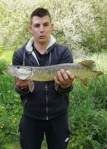 Northern Pike — pierre-alexandre lebon