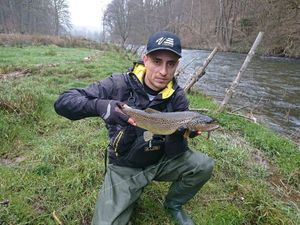 Brown Trout — Sebastian Ungureanu
