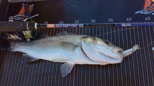 European Bass — Matys Pugliesi