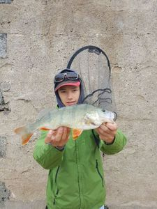 European Perch — Romain Souyri