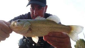 Largemouth Bass — Ben Chaumontel