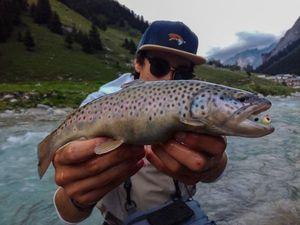 Brown Trout — Sacha Bosman Fishing