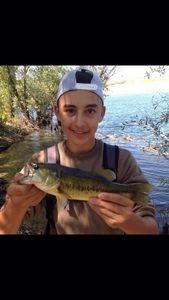 Largemouth Bass — Miguel Ribera