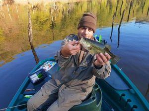 Largemouth Bass — Nicolas Delage