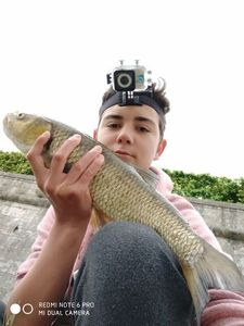Chub — TIM FISH (Youtube)
