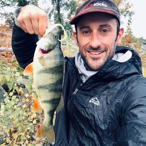 European Perch — Matthieu Marchandise