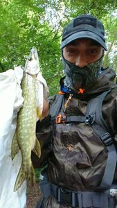 Northern Pike — Jeremy Davru