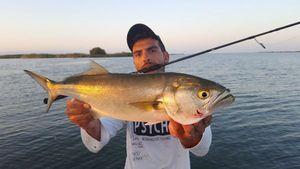 Bluefish — Jordan  Decomps