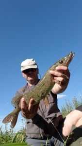 Northern Pike — Lolo Lass