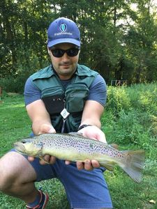 Brown Trout — Guillaume Lainé
