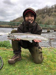 Atlantic Salmon (Landlocked) — Viet Fish