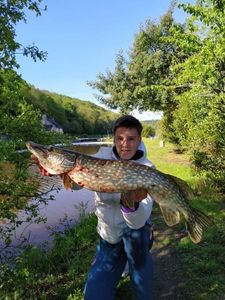 Northern Pike — Julien Gaitte