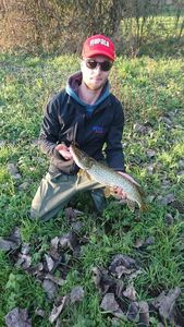 Northern Pike — Vincent Fouache