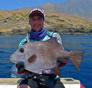 Triggerfish — Nicolas Xmylife