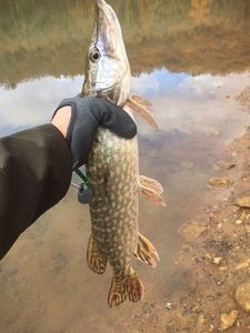 Northern Pike — Driss Makhout