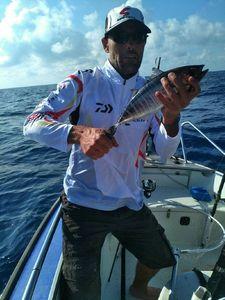 Southern Bluefin Tuna — Donat Rueff