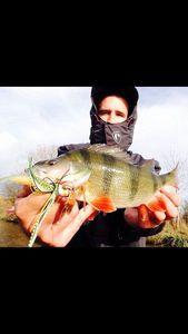 European Perch — Fisher Price