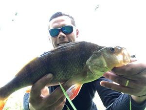 European Perch — barloup fishing
