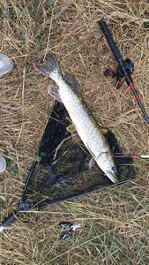 Northern Pike — Maxime Fatet